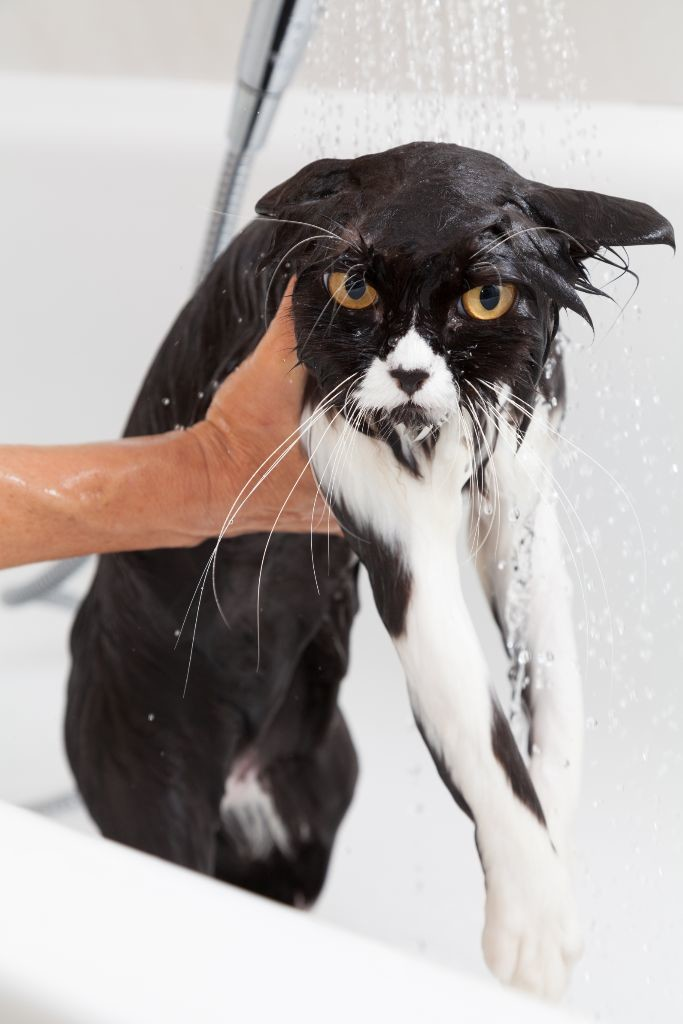 I always end up looking like this when done washing dishes!